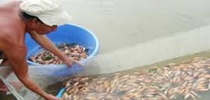 shrimp tub